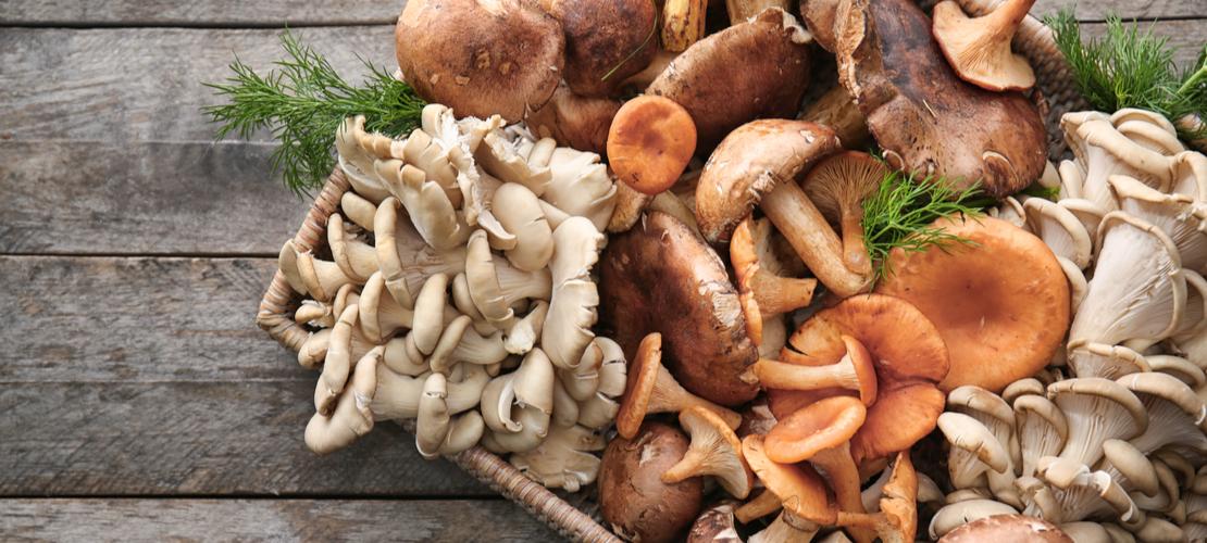Quels sont les bienfaits du champignon ?